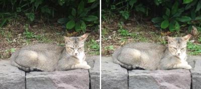 起きた猫交差法立体画像