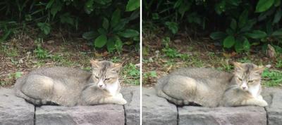 目をそらす猫交差法立体画像