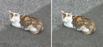 またこの猫交差法立体画像