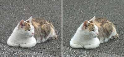 グラビア猫交差法立体画像