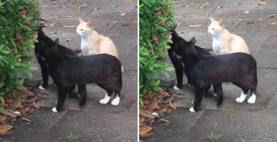 オセロ猫と薄茶猫交差法立体画像1