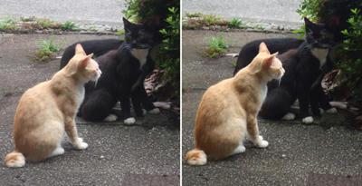 オセロ猫と薄茶猫交差法立体画像2