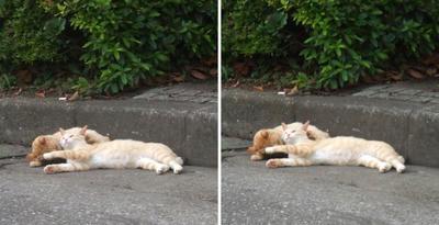 コケる猫交差法立体画像