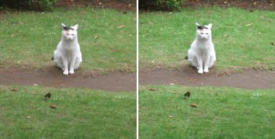 コチラを見る猫交差法立体画像
