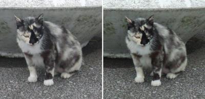 普通猫交差法立体画像