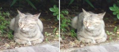 縁側?猫交差法立体画像2