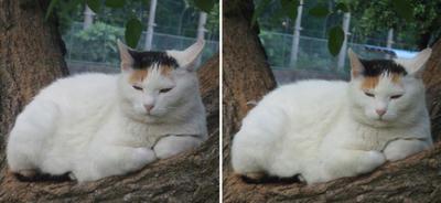 セレブ猫交差法立体画像