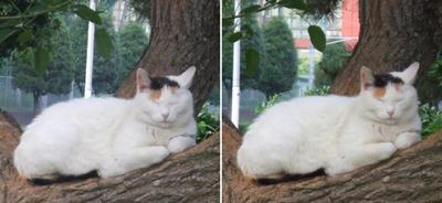 でも寝る猫交差法立体画像