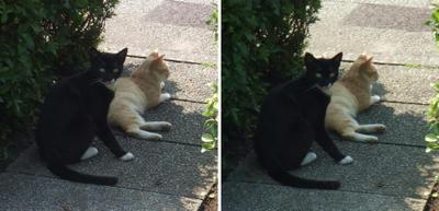 あっ!な 猫たち?交差法立体画像