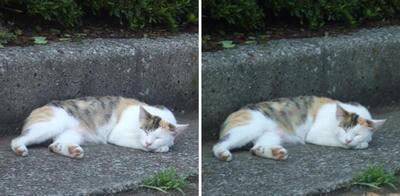 猫の寝姿交差法立体画像