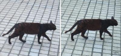歩く黒猫交差法立体画像