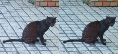 物思いに耽る猫交差法立体画像