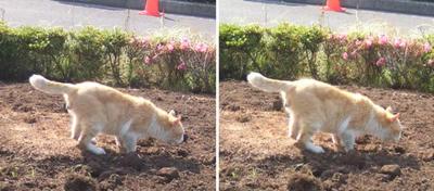 土を食う猫交差法立体画像