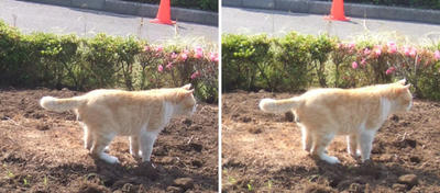 満足した猫交差法立体画像