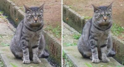 御出迎え猫交差法立体画像