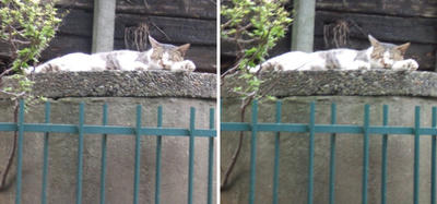 高台で休む猫交差法立体画像