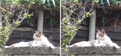 高台で何か気がついた猫交差法立体画像