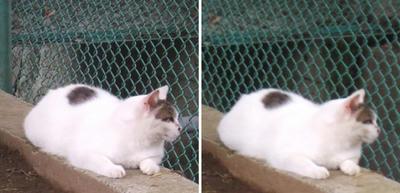 左右を確認する猫1交差法立体画像