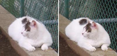 左右を確認する猫2交差法立体画像
