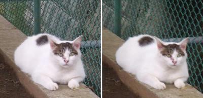 相談を聞く猫交差法立体画像
