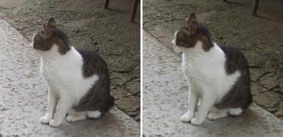 店番猫交差法立体画像