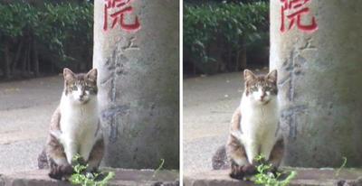 化け猫?交差法立体画像