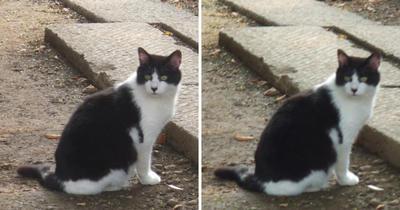 お寺さんのある場所の猫交差法立体画像