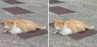 かわいい寝姿の猫交差法立体画像