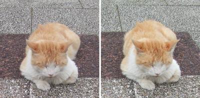 角度を変えてもかわいい寝姿の猫交差法立体画像