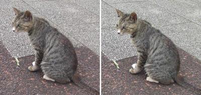 尋ねてくる猫交差法立体画像