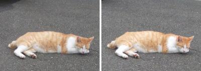 やっぱり寝ている猫交差法立体画像