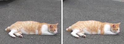 寝疲れ猫交差法立体画像