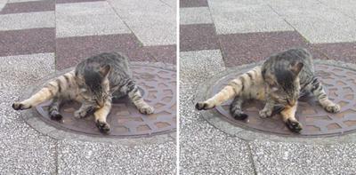 体操する猫交差法立体画像