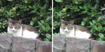 丸くなる猫交差法立体画像