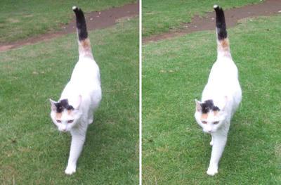 よってくる猫交差法立体画像