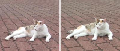 ノンビリする猫交差法立体画像