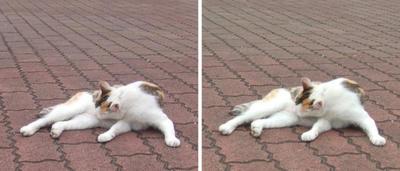 くにゅ猫交差法立体画像