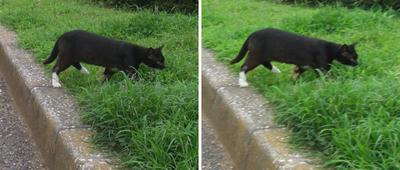 野生っぽい黒猫交差法立体画像