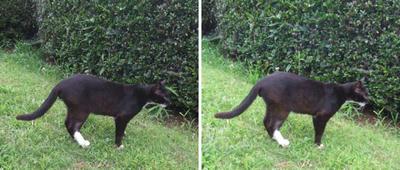 オセロ猫交差法立体画像
