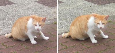 !?猫交差法立体画像