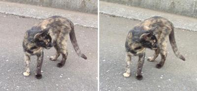 周りを気にする猫交差法立体画像