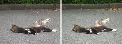 雑魚寝する猫交差法立体画像