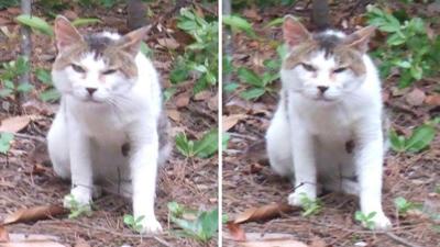 睨む猫交差法立体画像