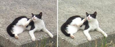 やわらかい猫交差法立体画像