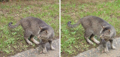 気が済んだ猫 交差法立体画像