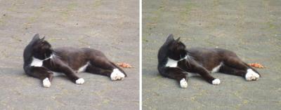 猫餌を側らに猫交差法立体画像