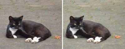 猫餌を勧める猫交差法立体画像