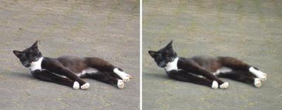 大げさにズッコケる猫交差法立体画像