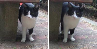 銚子の猫 交差法立体画像