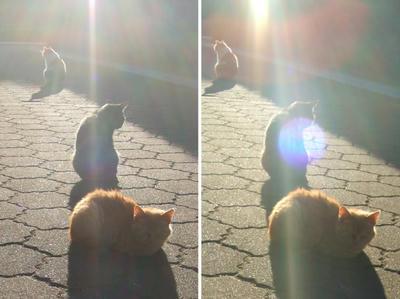 西日に照らされる猫たち交差法立体画像